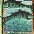 12 poissons