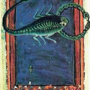 8 scorpion 2