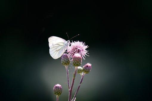 Butterfly 1663482 340