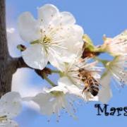 Mars bis