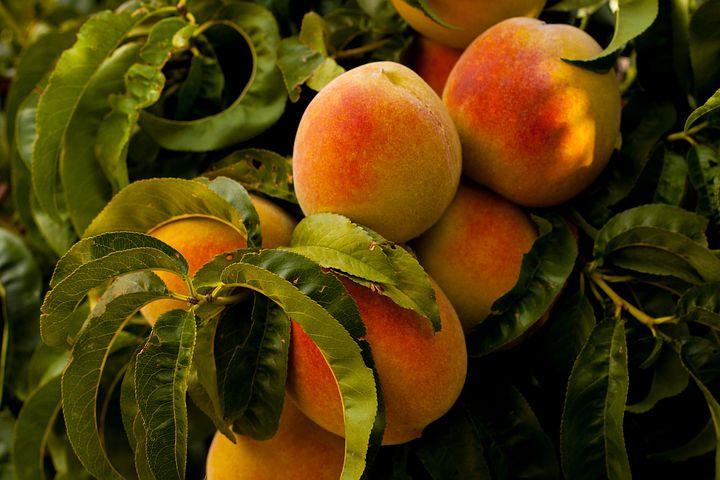 Peaches 869386 480